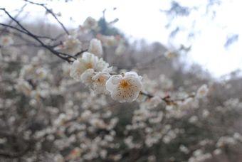 関西/兵庫/故郷の摩耶山