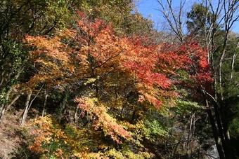 関東・富士周辺の山/おおらかな陣馬山(855㍍)