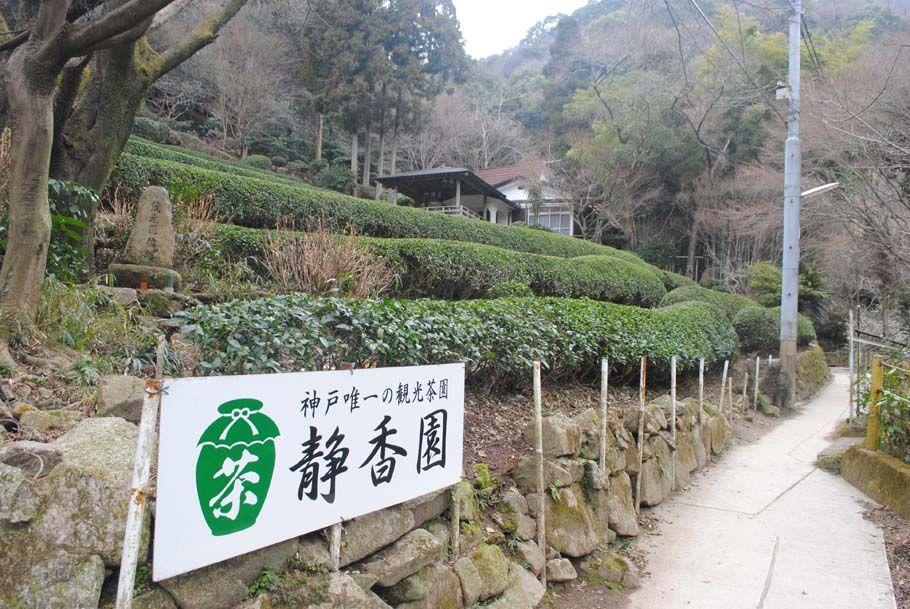 神戸で唯一の観光茶園があった