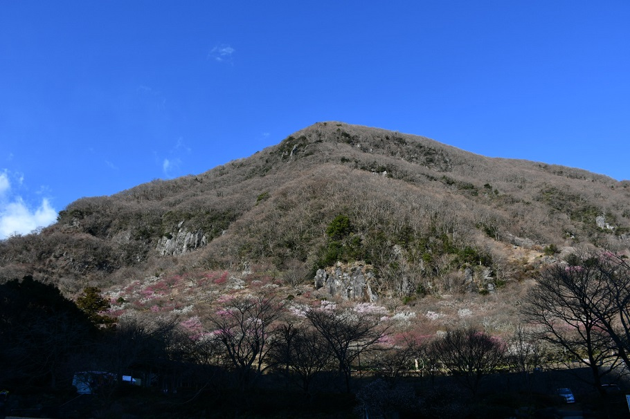 春の訪れ・南郷山と幕山