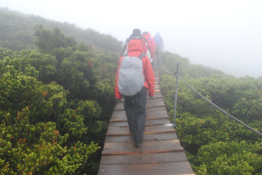 ダイセンキャラボクの中を歩く。山頂はもうすぐだ