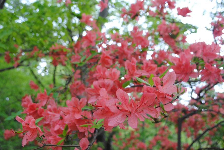 花咲く南高尾山稜