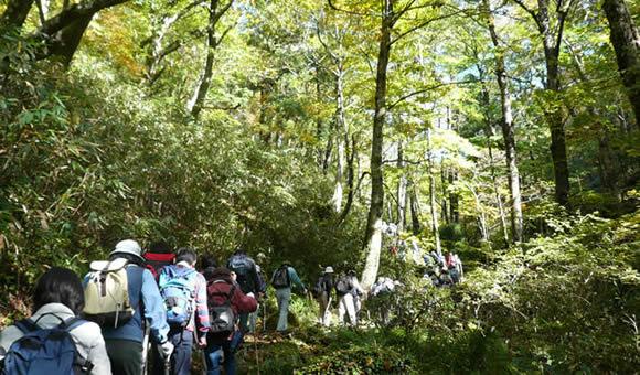 ブナ林の若杉原生林を歩く
