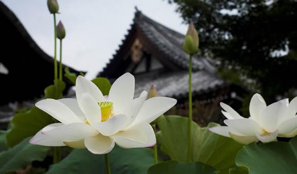 関西花の寺葉月京都・朽木の名庭コース