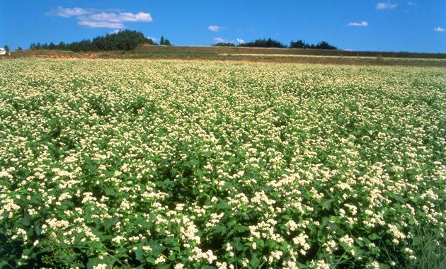 大和高原のそばの花畑(イメージ)