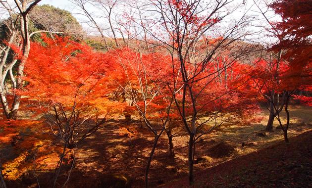 紅葉シーズンの正法寺山荘址(イメージ)