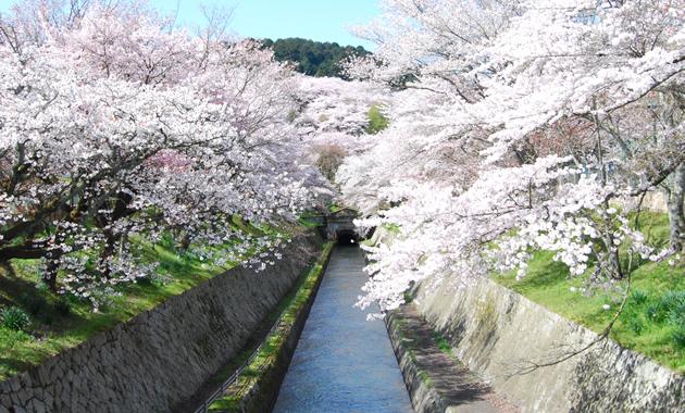春の琵琶湖疏水(イメージ)