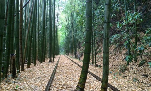 竹林と旧国鉄倉吉廃線跡(イメージ)