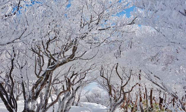 御在所岳の樹氷(イメージ)