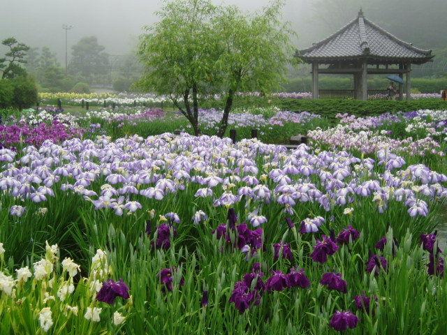 永沢寺の花しょうぶ園(イメージ)