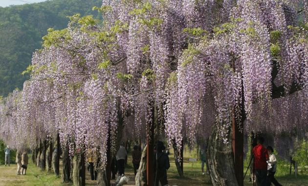 和気藤公園(イメージ)