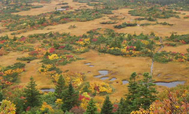 八甲田山の池塘と紅葉(イメージ)
