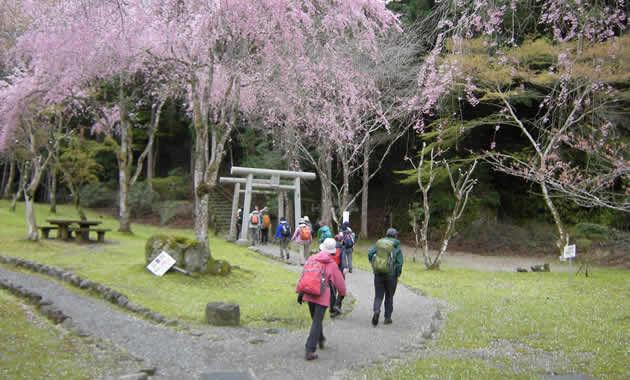 <女性限定>吉野の桜お花見登山