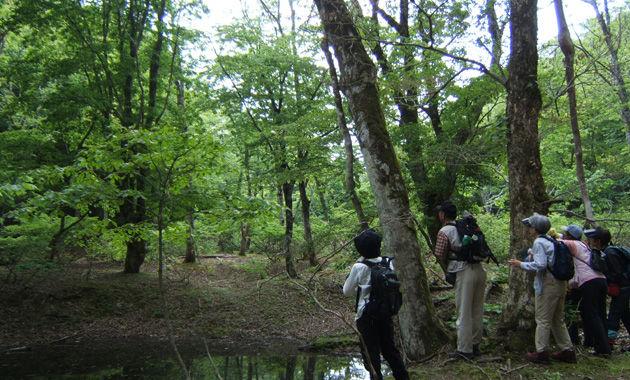 上谷・杉尾峠コース モリアオガエルの池(イメージ)