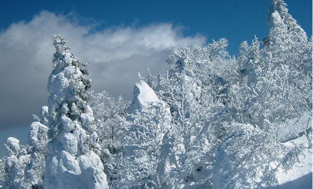 蔵王スキーの樹氷(イメージ)
