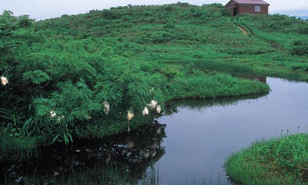 赤兎山の湿地赤池(写真提供:福井県観光連盟)