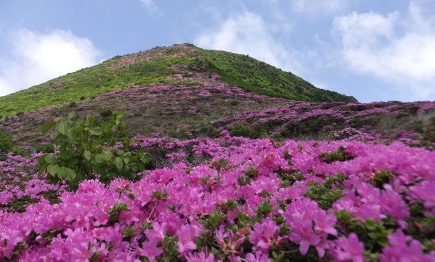 ミヤマキリシマ咲く九重連山(イメージ)