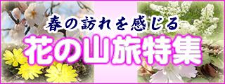 花の山旅特集